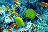 Sharm Al Sheikh