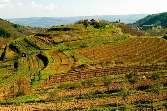 Friday Blog zasto skupo kad moze jeftino Hrvatska Istra