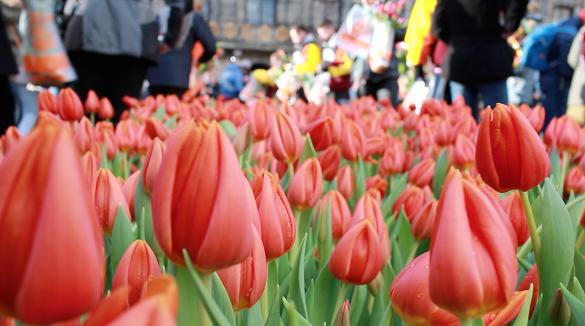 Najzabavniji januar u Evropi - Pronađite dašak proleća u Amsterdamu za dan Tulipana 1