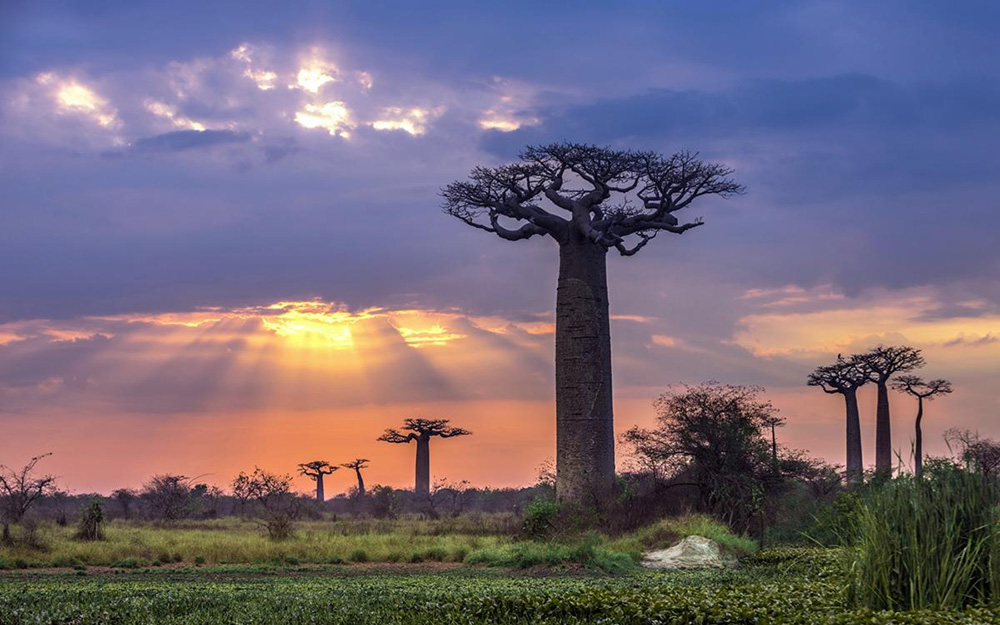 Ethiopian Airlines - Promotivna cena za Madagaskar