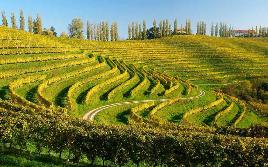 Gradić vina i Rimljana